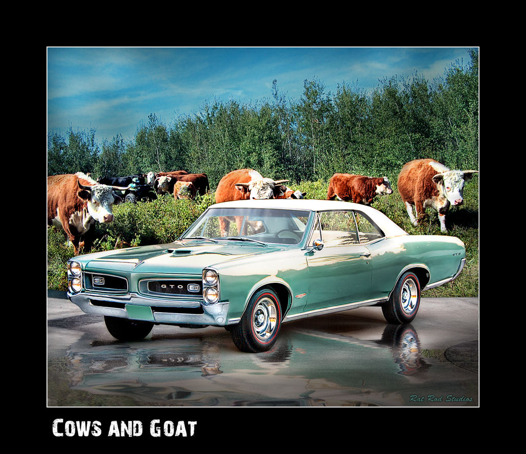 Click image for larger version  Name:cows and goat.jpg Views:134 Size:240.6 KB ID:33473