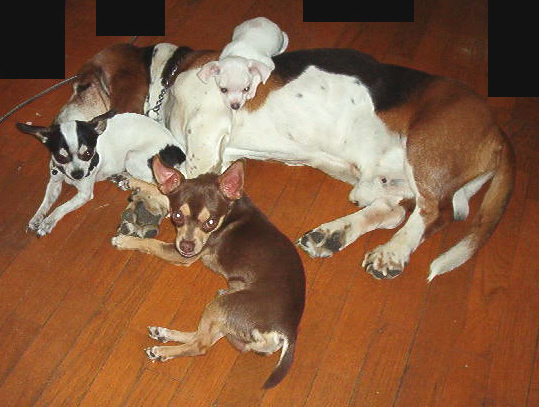 Click image for larger version  Name:cropdogs.JPG Views:299 Size:133.0 KB ID:10159
