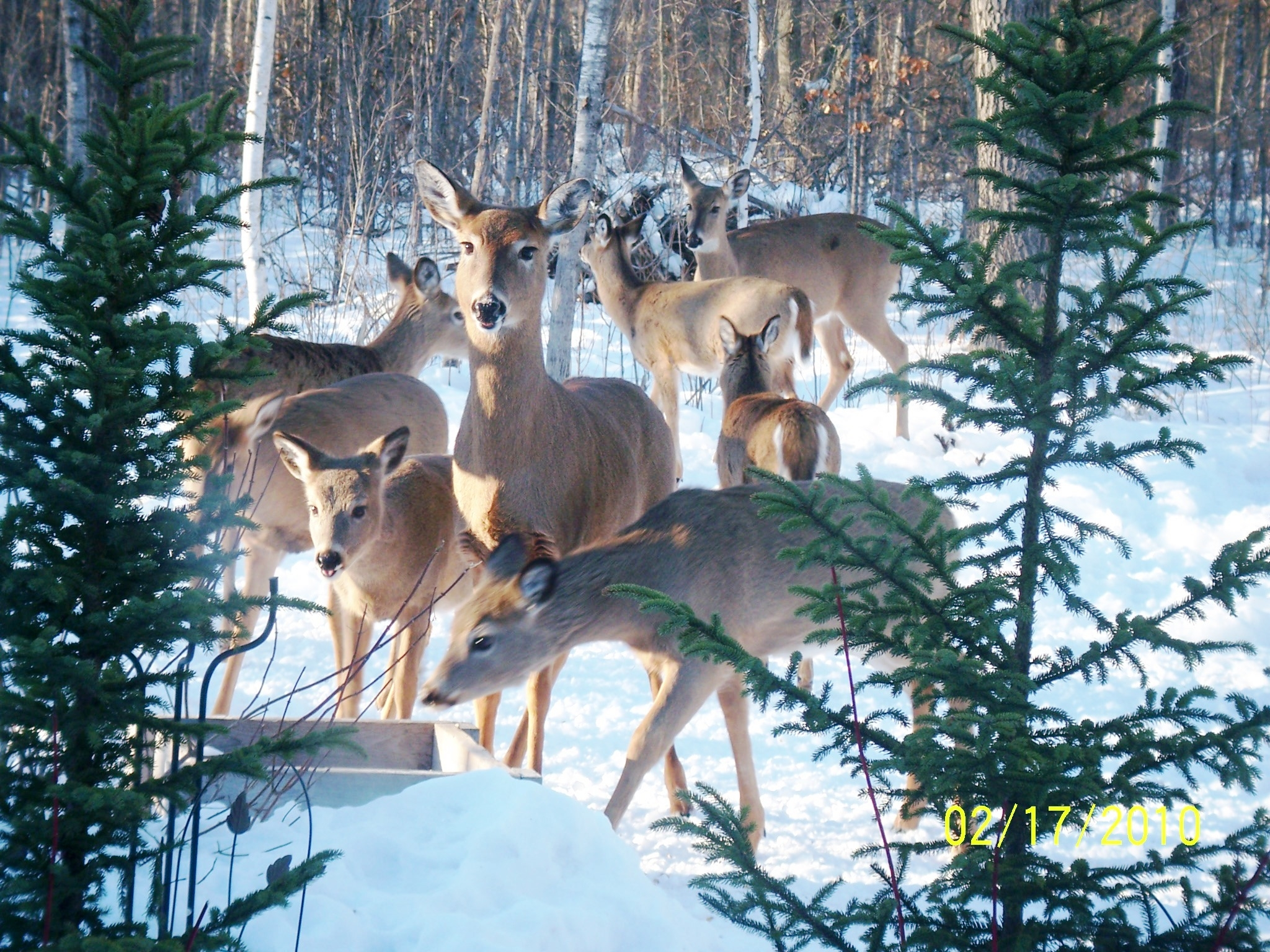 Click image for larger version  Name:deer 1.JPG Views:86 Size:2.00 MB ID:59485