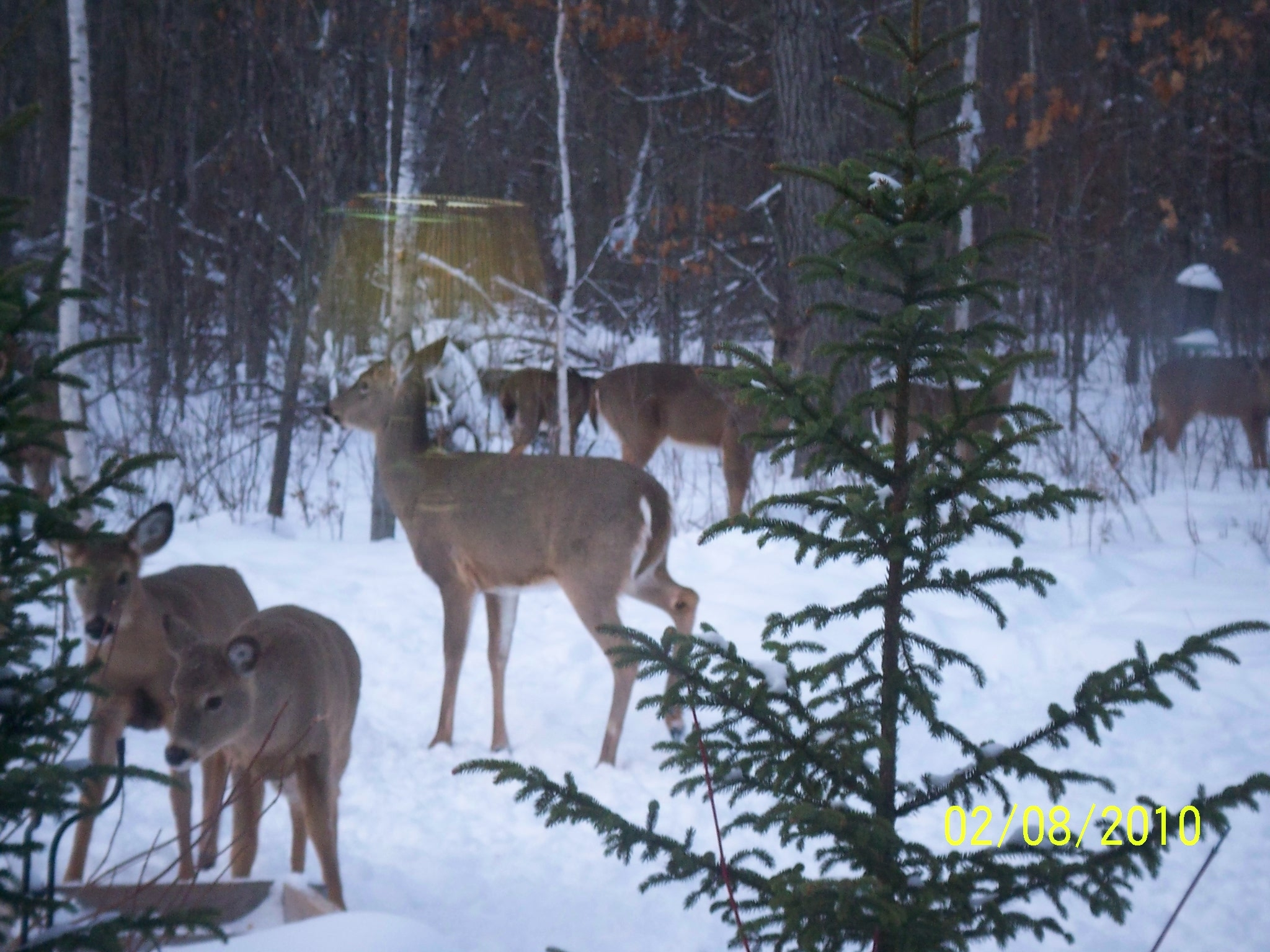 Click image for larger version  Name:deer 6.JPG Views:67 Size:1.41 MB ID:52566