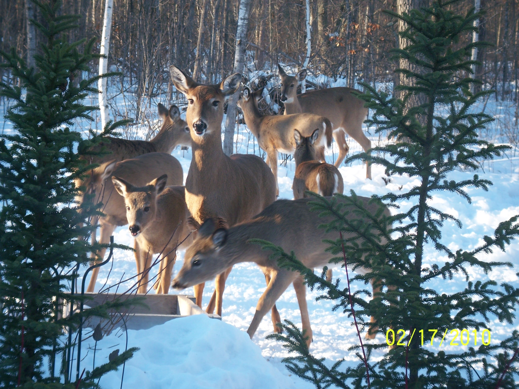Click image for larger version  Name:deer 9.JPG Views:75 Size:1.93 MB ID:59487