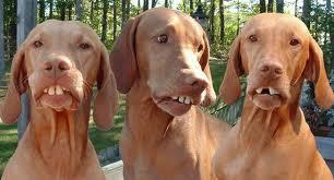 Click image for larger version  Name:imagesredneck dog.jpg Views:73 Size:10.4 KB ID:115802