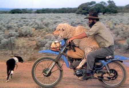 Click image for larger version  Name:sheepmanmotorcycle.jpg Views:128 Size:23.0 KB ID:16129