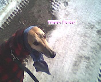Click image for larger version  Name:Where Florida.jpg Views:103 Size:17.6 KB ID:4456